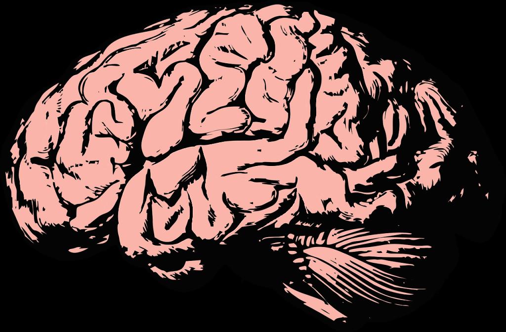 въглехидрати мозък кето