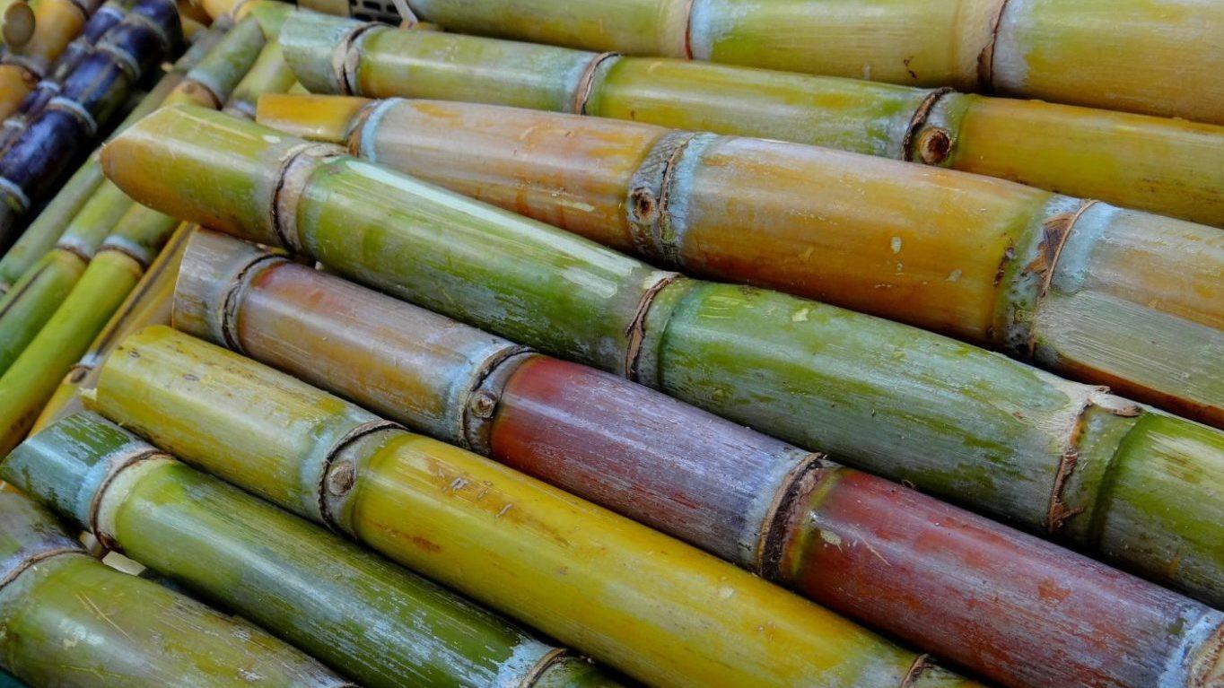 сквалан захарна тръстика